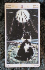 tarot of the pagan cats eight of wands